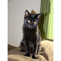 Sydney is our new kitten. We adopted Sydney a few weeks ago she was rescued from Hurricane Gustav...