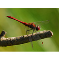 dragonfly insects animals nature