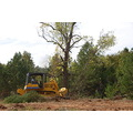 bulldozer walnut tree