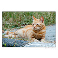cat pet animal outdoor nikon sigma bulgaria