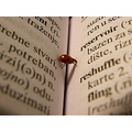 book insect words