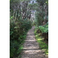 takaka nelson path pupusprings