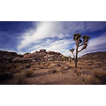 Califfoto Joshua Tree National Park California BessaL Wide Angle Landscape