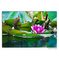 waterlilly river water nature flower nikon sigma pleven bulgaria