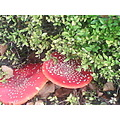 mushroooms toad stall toadstool university