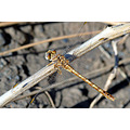 insect dragonfly wild nature garden spain water fly creature alora uk