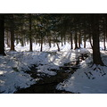 snow nature trees wood
