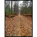 rain wet two track forest