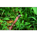 Dragonfly Nature Bogs