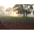 spider web sunrise fog perth hills littleollie