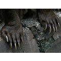 bear claw zoo closeup judyss
