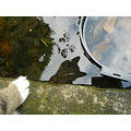 reflectionthursday pond tom