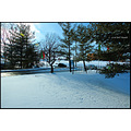 stlouis missouri us usa landscape snow plants trees wps bh 2007