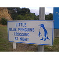 Mind for the blue penguins !!