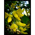 = ]   I Know I Have A Lot Of Pictures That Are Of Yellow Flowers,  But Lets Just Say This Is A...