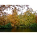 netherlands groeneveld tree water autumn nethx groex waten treex autux