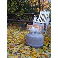 cat pet animals max autumn compautumn07