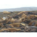 Seal Lions in Puerto Madryn