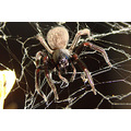 highlight sun investigate web camera spider little lady perth littleollie