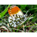nature grass butterfly
