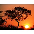 Sunset Africa Nature