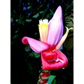 flowers nature tropical