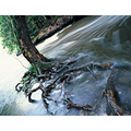Water Trees Nyxphotography Plotterkill abstract surreal edge