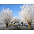 eemnes winter tree favourite2007friday nethx eemnx wintx landn treex
