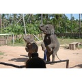 the dancing elephant.. hehe