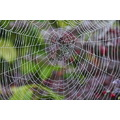Another web....................