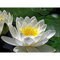 whitefriday2 waterlily andalucia home spain