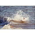 Nothing can stop this dog swimming not even a rough sea and the waves crashing over it