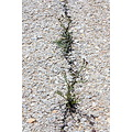 A Crack in a Taxiway