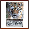tiger feline rescue sanctuary