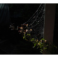spiderweb plant hold who up patio perth littleollie