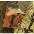 Loch of the Lowes Perthshire Scotland RedSquirrel