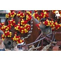 HORSES YELLOW AND RED