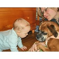 babies dogs Boxers