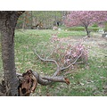 Tanka 