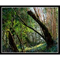 somerset woods light nature swellwood fairytale somersetdreams
