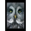 owl bird wildlife
