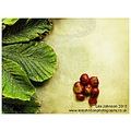 Still Life Fine Art Leaf Leaves Horse Chestnut Conkers Autumn Spideyj