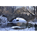 centralpark park newyorkcity ny snow buildings ducks lake people trees