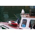 Fishing boats seagull