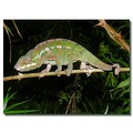 switzerland zurich zoo animal chameleon switx zurix zoox animx reptx