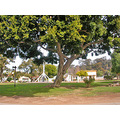 sandiego sdoldtownfph oldtown shade tree weatherfriday