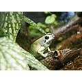 Frog Animal Amphibian Nature