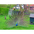 city peacock zoetermeer Holland