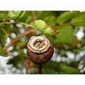 Nature Gillards Macro Stud Tree Rotten Bud Hard Wood