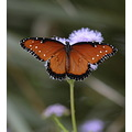 butterfly insect flower